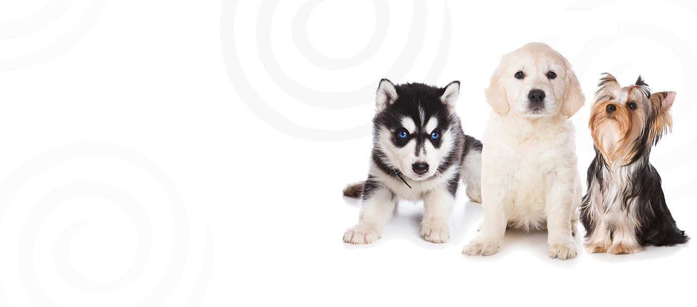 Wolf hybrid puppies for sale in ohio - Find Your Perfect Match